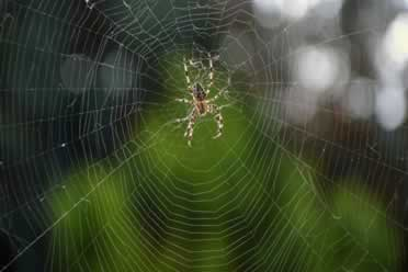 Are Spiders Intelligent? (Very Interesting Info)