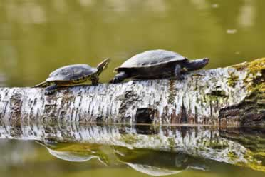 Are Turtles Cold-Blooded or Warm-Blooded? (Full Guide)