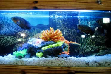 Can a Strong Filter Kill Fish?