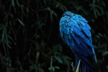 Can Birds Die of Loneliness? (Checked Out)