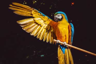 Can Birds Sleep With The TV On? (Fascinating Facts)