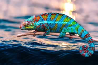 Chameleons: 10 Amazing Things You Should Know