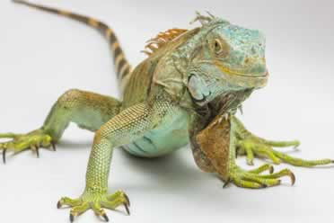 Pet Reptile Diet (Sugar, candy and chocolate checked out)