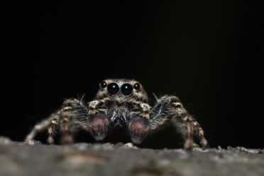 Can Spiders See at Night? (In Details)