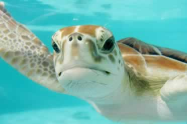 Can Turtles Eat Celery? (Fully Answered)