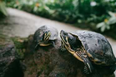 Can Turtles Eat Spinach? (Answered)
