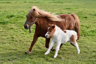 Can You Keep a Pony in Your Backyard?