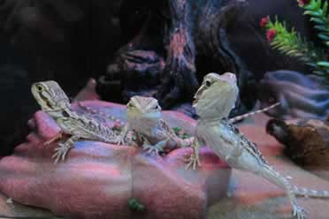 Keeping Reptiles in Tubs? (Lizards and Snakes checked out)