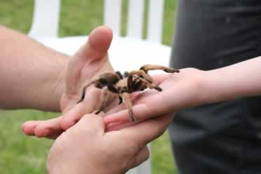 Can You Put A Tarantula In Your Mouth? (Shocking Info)