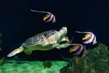 Can You Put Turtles and Fish in The Same Tank? (Useful Tips)