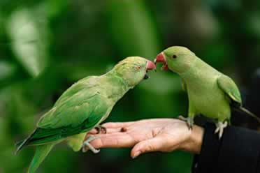 Do Birds Enjoy Being Petted? (What You Need To Know)