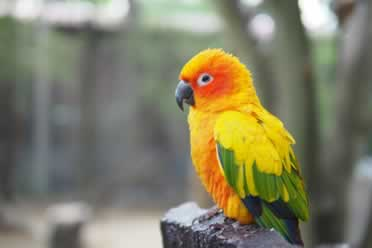 Do Conures Make Noise At Night? (Checked Out)