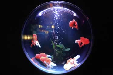Do Fish Get Bored Living In A Tank? (Must Know Information)