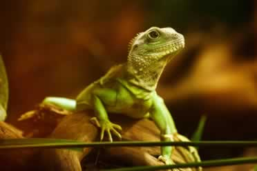 Do Lizards Get Bored? (Fascinating Reptile Facts)