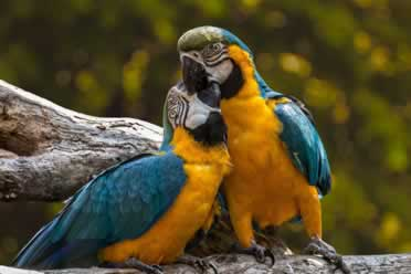 Do Parrots Kill Each Other? (Must-Know Facts)