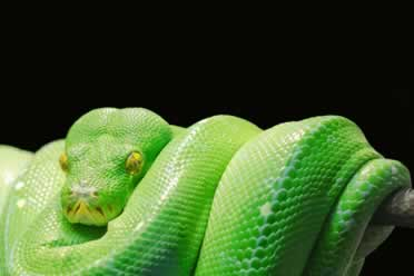 Do Snakes Poop While Shedding? (Amazing Info)