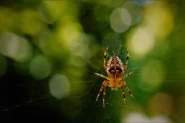 Do Spiders Have Noses? (Fact Checked)
