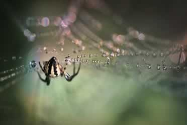 Do Spiders Swim in Water? (Detailed Information)