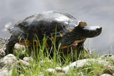 Do Turtles Sleep with Their Eyes Open? (Interesting Facts)