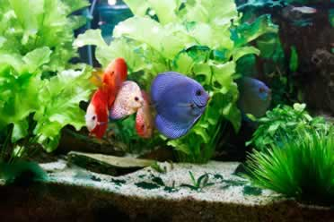 How Long Can Fish Survive in a Tank Without Filter?