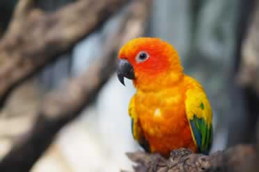 Conures: 9 Amazing Things You Should Know