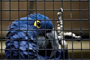 How Much Does It Cost To Get a Bird's Nail Clipped? (Info)