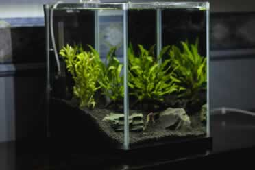 How To Make an Ant Farm With a Fish Tank? (Briefly Discussed)