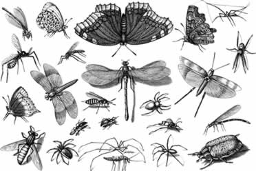 Insects or Bugs: What Is a Spider? (Amazing Facts)
