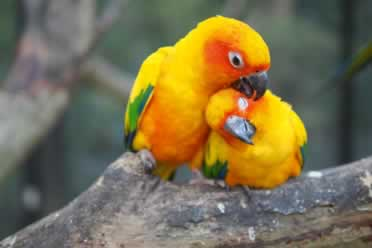 Is It Better To Have One Or Two Conures? (Checked Out)