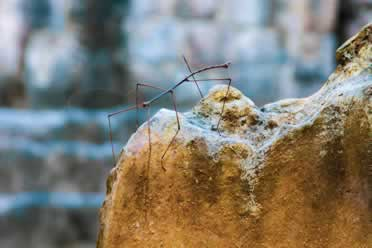 Stick Insects: 19 Brilliant Things You Should Know