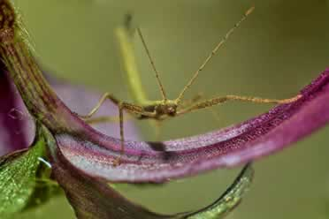 Stick Insects: 30 Amazing Things You Should Know