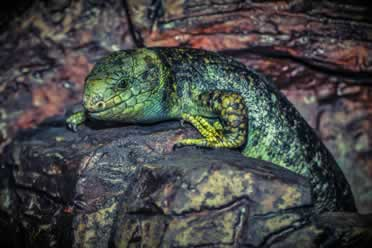 Reptiles: 9 Cool Things You Should Know