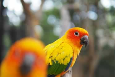 What Is the Smartest Conure? (Everything You Need to Know)