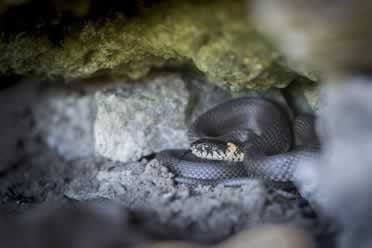 What Snakes Do at Night? (Revealed)