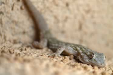 Best Bedding for Lizards? (Soil checked out)