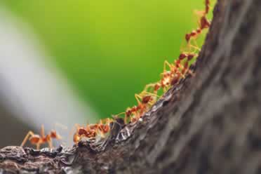 Why Do Ants Carry Their Dead? (Exact Reasons)