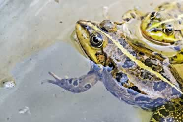 Frogs: 10 Strange Things You Should Know