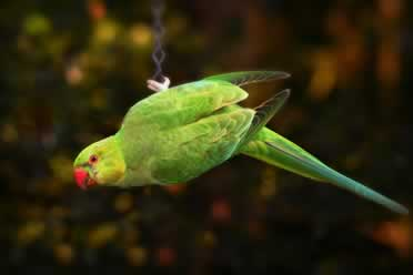 Why Does My Parakeet Close His Eyes When I Pet Him? (Amazed)